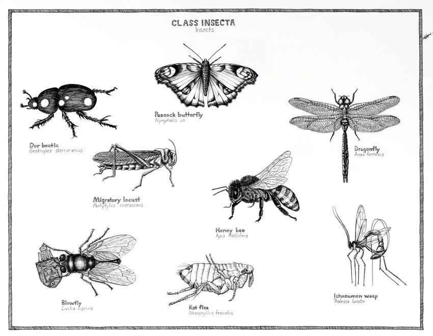 insectos y sus clases: