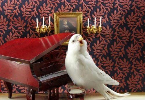 Loro pianista
