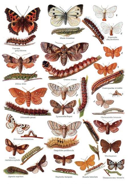 mariposasypolillas