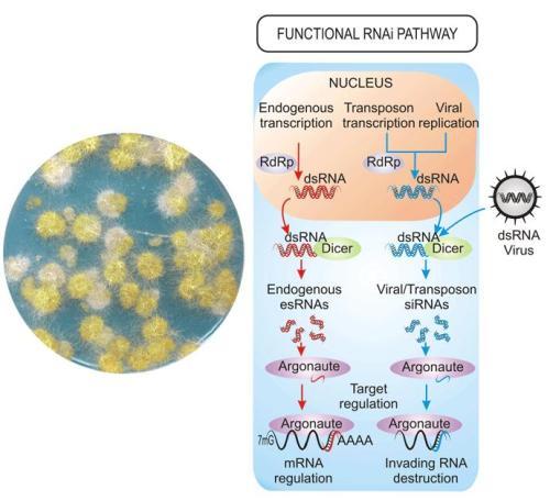 argonautas-moleculares-genes-maliciosos
