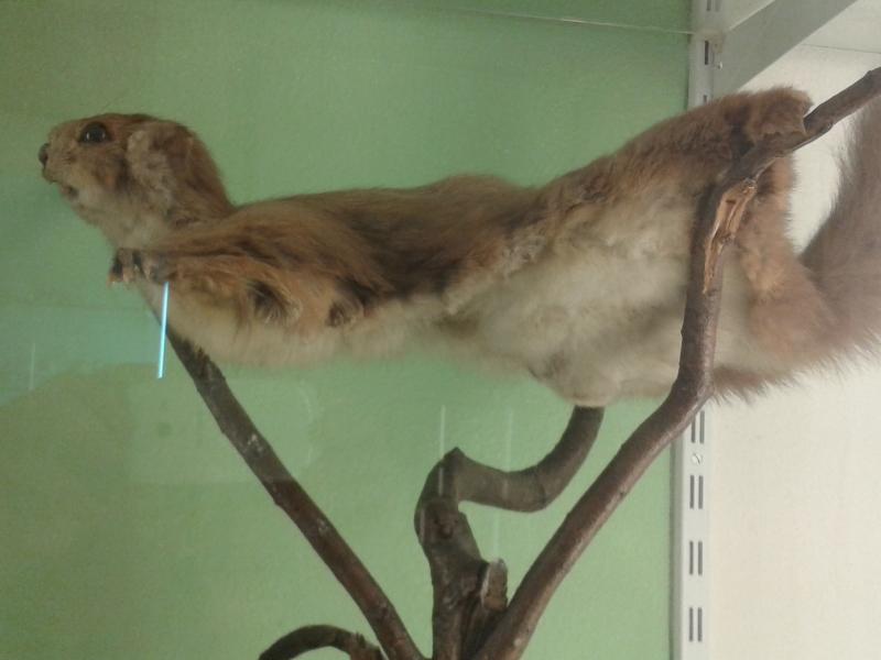 Esquirolvolador