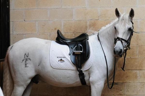 caballomarcado