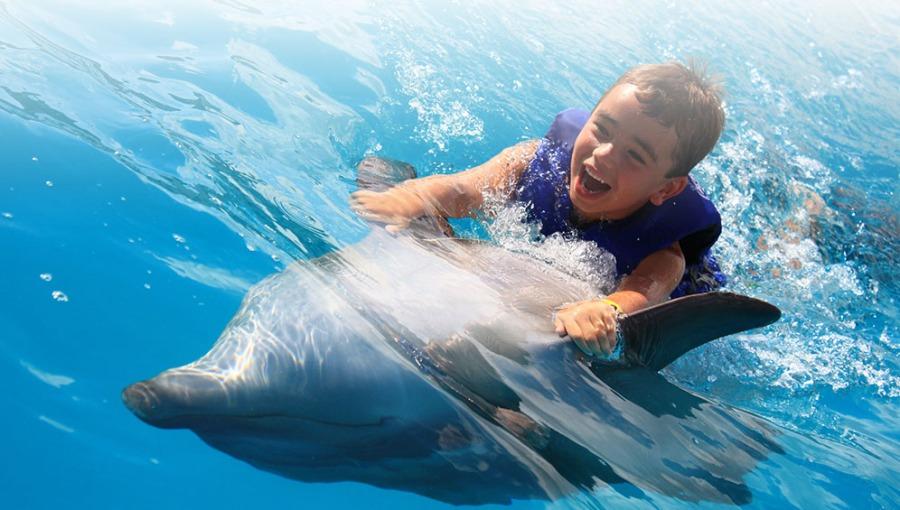 alomosdedelfin