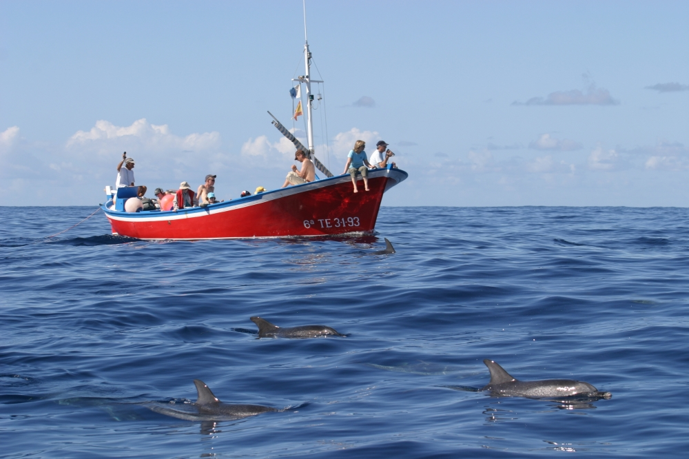 barco-delfines