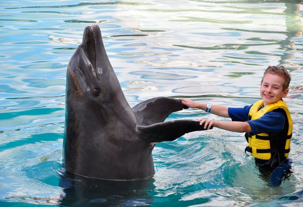 delfinyniño