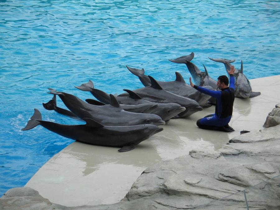 entrenamientodelfines