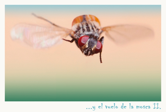 el-vuelo-de-la-mosca